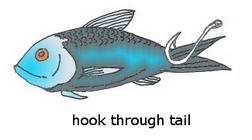 minnow hooked through tail
