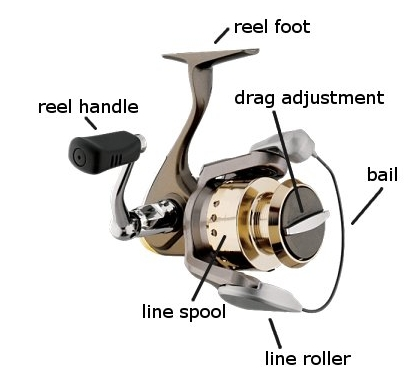 The fishing reel types of fishing reels for Open reel fishing pole